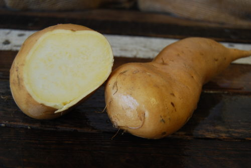white sweet potato
