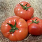 san diego tomatoes