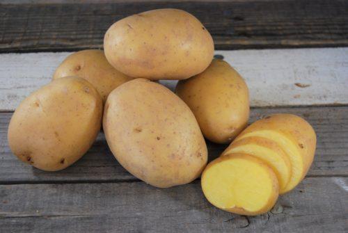 gold rush potatoes