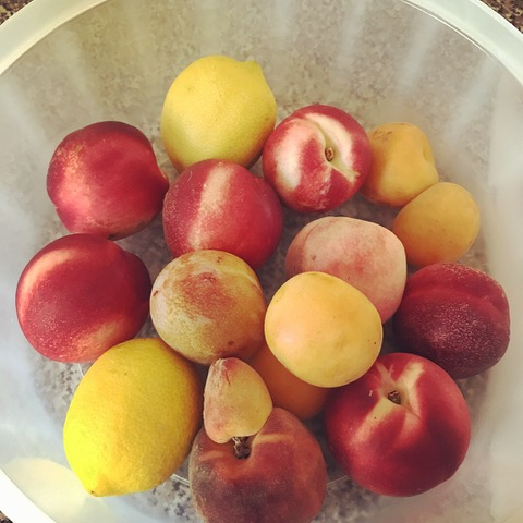 Mmm, fresh fruit from Daily Harvest Express: plums, tangerines, and peaches. Plus, lemons from my own tree! These form the basis of my sugar free Plum Crumb dessert recipe below.
