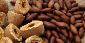 Introducing Barùkas nuts: a newly discovered superfood that could save the world.