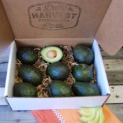 avocado gift box