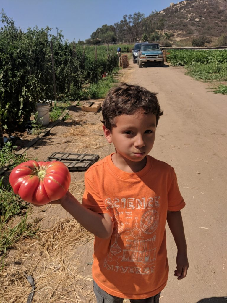 A young scientist and his giant heirloom tomato.