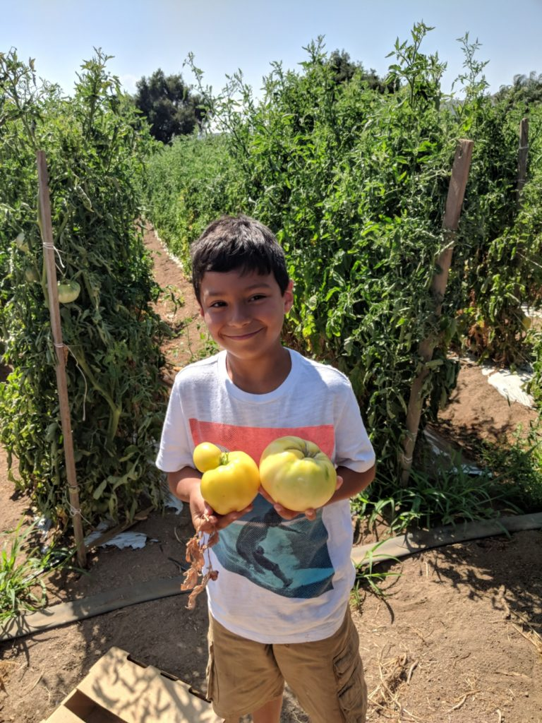 Farm kids help with quality control and new technology at Rivas Farm.