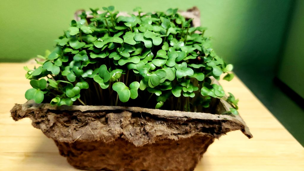 living microgreens, San Diego organic food delivery