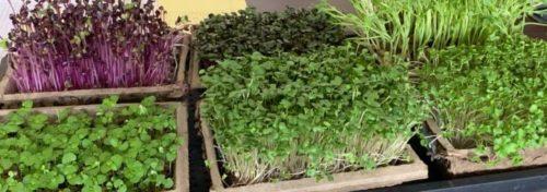get microgreens delivered