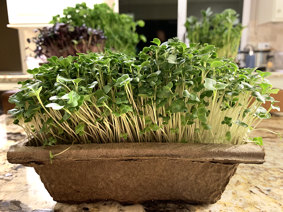 Microgreens from High Ranch Farm are so beautiful, you almost feel bad for eating them. Almost.