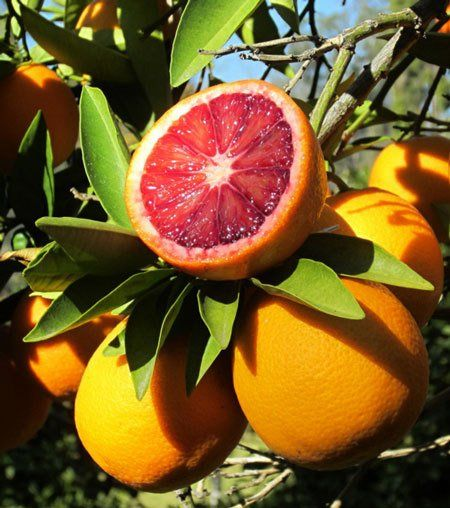 5 Quick Facts About the Blood Orange