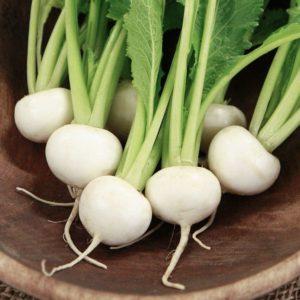 tokyo turnips