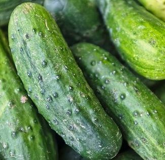 kirby cucumbers for pickling