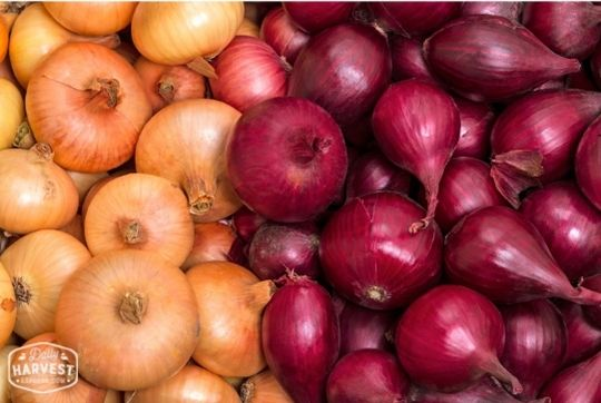 Yellow or Red Onion